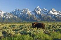 Grand Teton National Park (photo: David Blackley, www.flickr.com/photos/mtndave58)